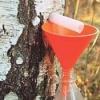 Березовий сік - рецепт консервування
