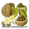 Бразильський горіх. Корисні властивості, калорійність, протипоказання, склад