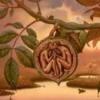 Чим корисна шкірка волоського горіха?