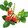 Що можна приготувати з плодів шипшини?