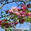 Дієта весна 35 днів