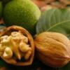 Волоський горіх - лікувальні властивості