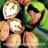 Волоський горіх: корисні властивості та протипоказання, приготування ліків