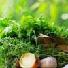 Як заготовлювати трави?