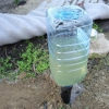 Капельный полив из пластиковых бутылок. Современные технологии в домашних условиях