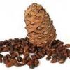Кедровий горіх - корисні властивості