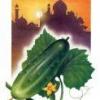 Лікарська рослина огірок посівної