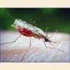 Малярія симптоми, лікування, профілактика, діагностика