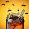 Мед каштановий, кіпрейний, еспарцетовий корисні властивості