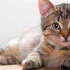 Світ очима кішки