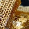 Мед і сироїдіння: їсти чи не їсти?