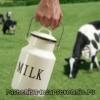 Молоко коров'яче - калорійність, користь і шкоду людині