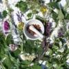 Народні методи лікування алергії