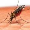 Народні методи лікування малярії
