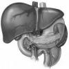 Народні засоби для лікування печінки