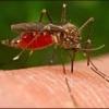 Народні засоби при укусах комах