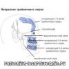 Невралгія трійчастого нерва: симптоми, лікування, препарати