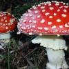 Отруєння грибами діагностика і лікування