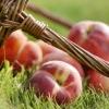 Персикове масло: застосування і властивості