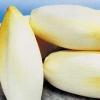 Чи корисний цикорій? Цикорій в народній медицині