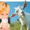 Корисні властивості козячого молока для дитини
