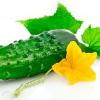 Користь і шкода огірків, і корисні властивості огіркового соку