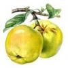 Практично корисні властивості яблук