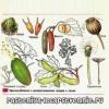 Поширення плодів і насіння у рослин, про способи