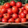 Скільки калорій в помідорі? Корисні властивості томатів і їх застосування в кулінарії і косметології