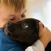 Собаки знижують ризик атопічного дерматиту у дітей