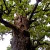 Властивості відвару з кори дуба