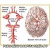 Поліпшення кровообігу головного мозку, препарати