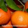 Варення з мандаринів часточками і з мандариновою шкірки