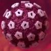 Вірус папіломи людини (впл) високого онкогенного ризику