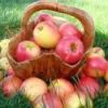 Вітаміни містяться в яблуках - які?