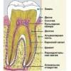Чи відновлюється зубна емаль?