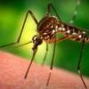 Збудник яких інфекцій передається через укуси комах
